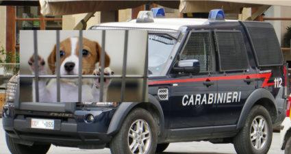 Cardito Traffico Cani