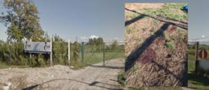 Oasi Parco Ambientale Natura Viva Succivo