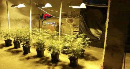 Casoria marijuana